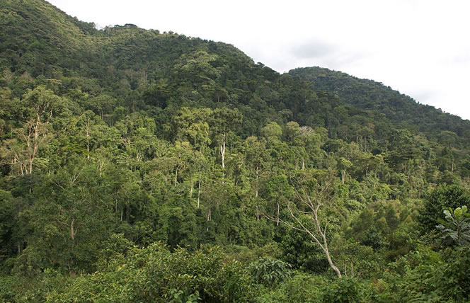 View of Bwindi Impenetrable National Park