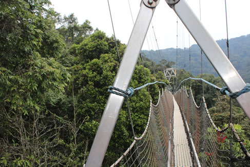 Canopy walk Adventure in Nyungwe Forest- Rwanda